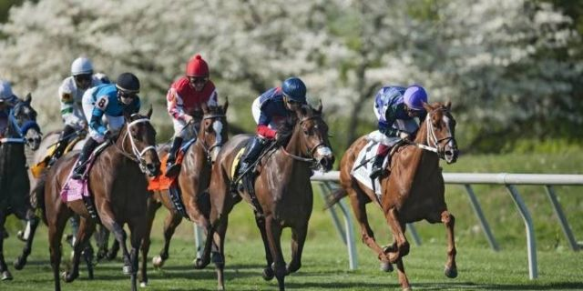 Horse Racing Preview 9th April 2017