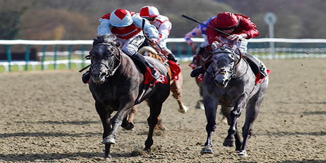 Horse Racing Preview - Chelmsford City - 5th October 2017